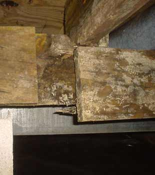 Extensive basement rot found in Picton by McInroy Basement Systems