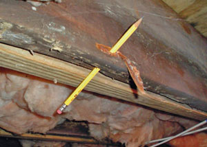Destroyed crawl space structural wood in Marmora