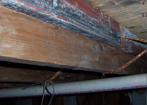 Rotting, decaying wood from mold damage in Verona